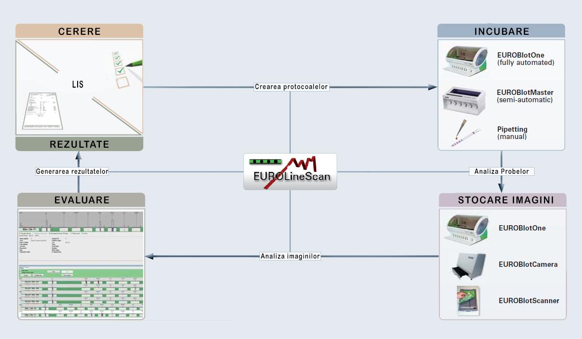 Software interpretare Imunoblot- EUROLineScan