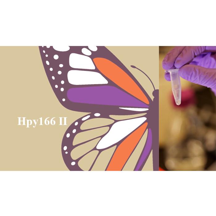 Enzima restrictiva de clasa II Hpy166 II