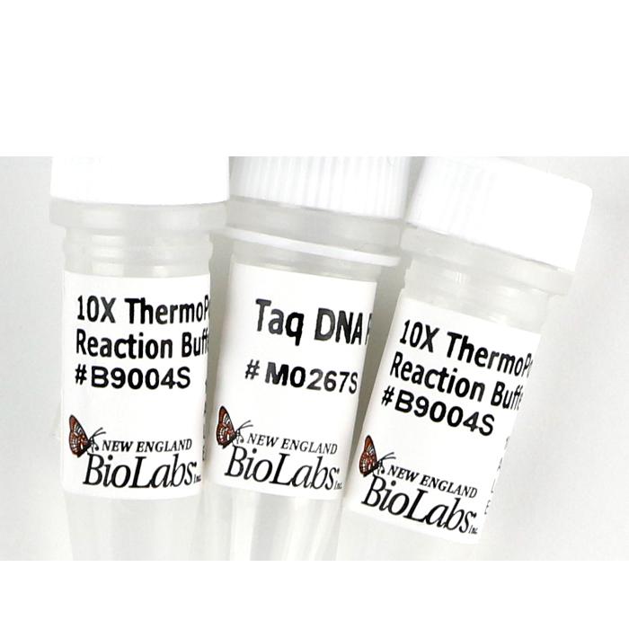ADN polimeraza - Taq DNA Polymerase