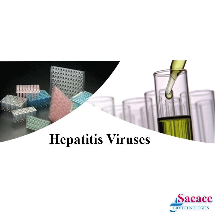 Virusul Hepatic
